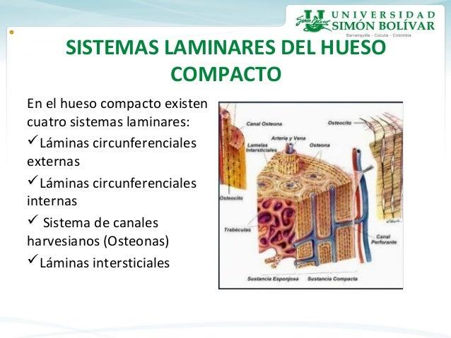 Tejido óseo Histología