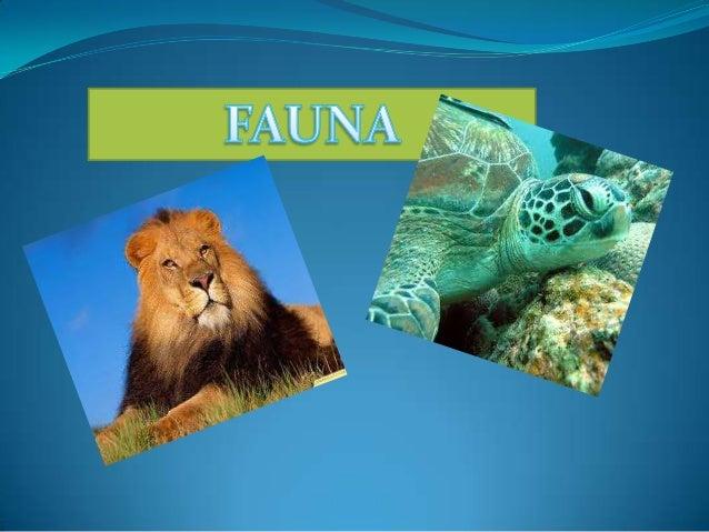  La fauna es el conjunto de especies animales que habitan en una región geográfica, que son propias de un período geológi...
