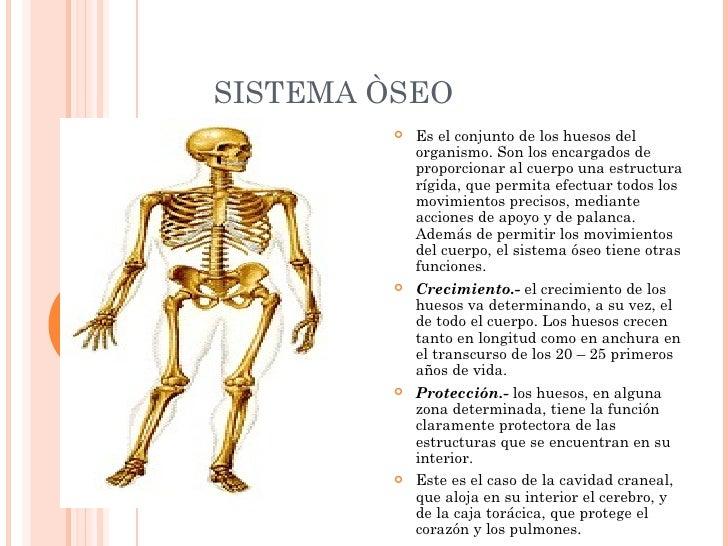 EL SISTEMA OSEO POR ERIKA MOSQUERA
