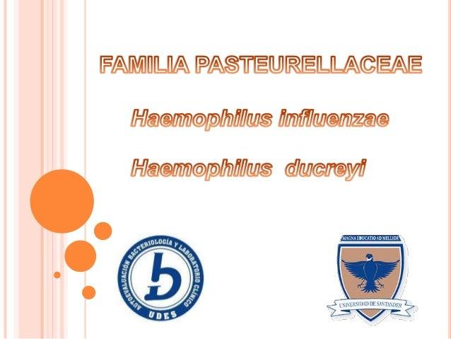  Conocer las principales características de Haemophilus influenzae y Haemophilus ducreyi.  Reconocer las características...