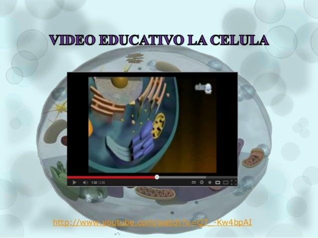 Diapositivas la celula
