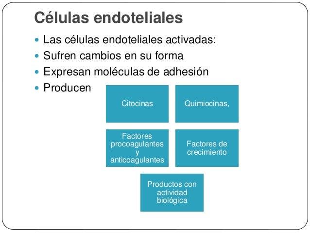 Células musculares lisas vasculares  Las células musculares lisas participan en la reparación vascular habitual y en proc...