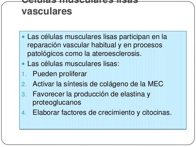 Células musculares lisas vasculares  Los factores que mantienen las células musculares lisas en un estado quiescente son:...
