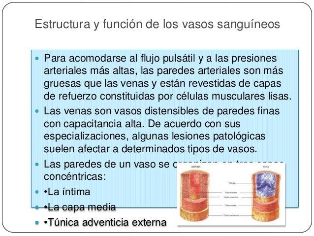 Organización vascular  Las arterias se diferencian en tres tipos, en función de su tamaño y estructura:  • Arterias elás...