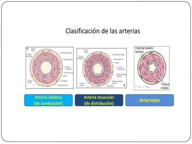 Células endoteliales  El mantenimiento de un recubrimiento normal de las células endoteliales no trombógenas requiere: