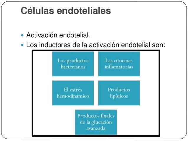Células endoteliales  La exposición de las células endoteliales a los inductores de la activación en grandes cantidades o...