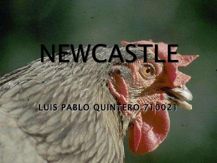 LUIS PABLO QUINTERO 710021
