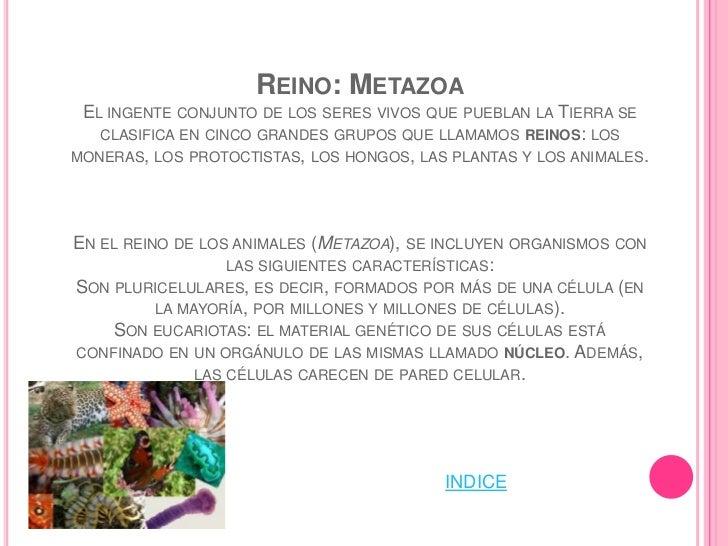 GRADO: COELOMATAGRUPO DE ANIMALES DEL SUBREINO EUMETAZOA , DE LA   RAMA BILATERIA , QUE PRESENTAN UNA CAVIDAD     VISCERAL...