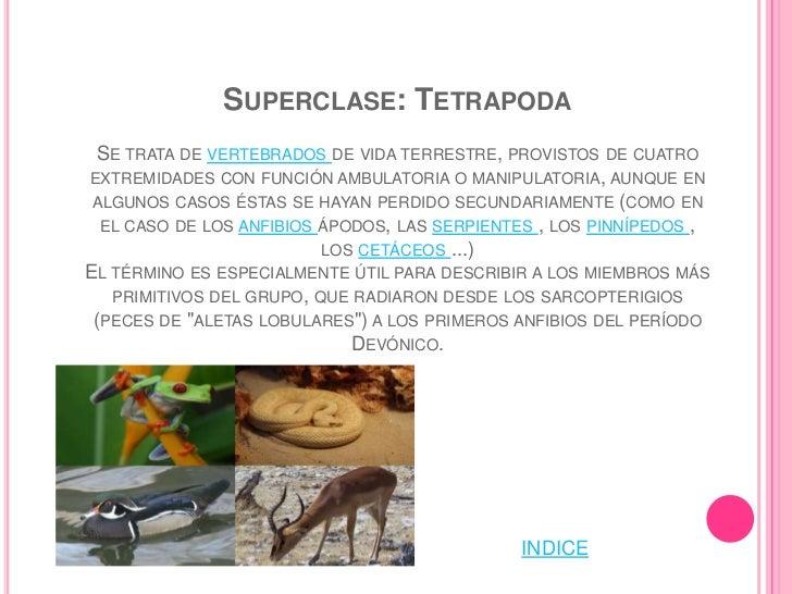SUBCLASE: EUTHERIA                   ESQUEMA DE UNA PLACENTA        (AUTOR HENRY GRAY. LICENCIA DP. FUENTE: WIKIPEDIA )EST...