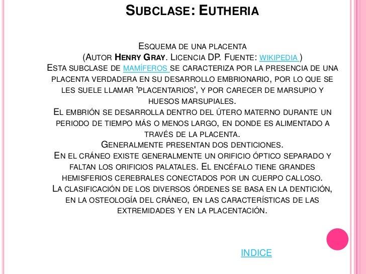 FAMILIA: HYDROCHAERIDAEEN ESTA FAMILIA SE INCLUYEN LOS ROEDORES MÁS GRANDES DEL MUNDO,PUDIENDO ALCANZAR LOS SESENTA KILOGR...