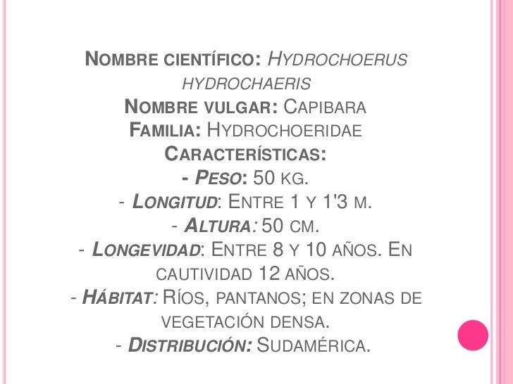  - Costumbres: Especie gregaria.Alimentación: Herbívora (plantas acuáticas, gramíneas       de ribera, pastos, maíz, plát...