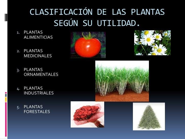 Diapositivas para wiki for Funcion de las plantas ornamentales