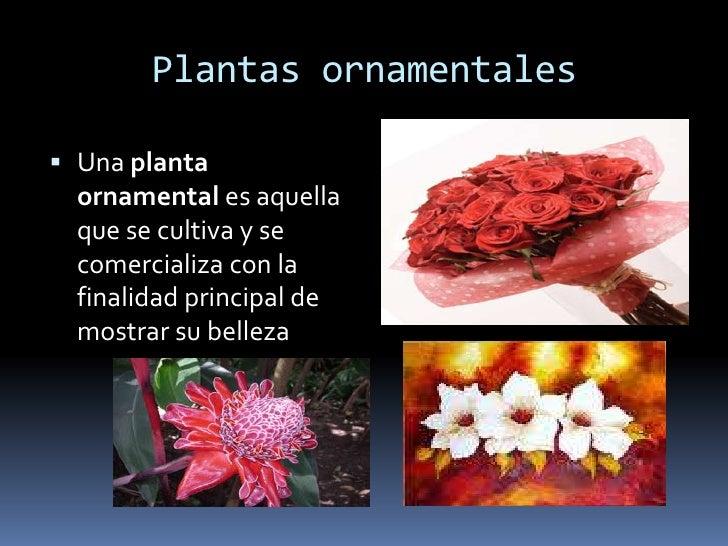 Diapositivas para wiki for Que significa plantas ornamentales