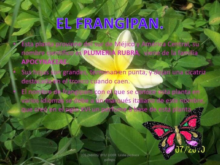 La flora de mi colegio for Plantas decorativas con sus nombres