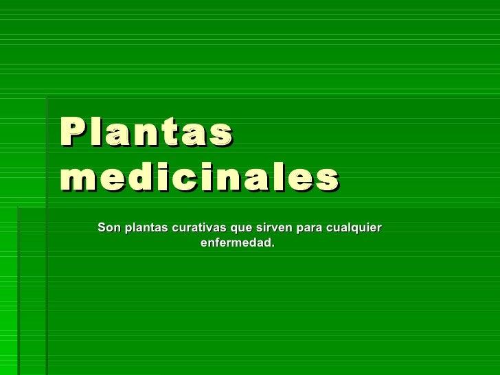 Plantas medicinales Son plantas curativas que sirven para cualquier enfermedad.