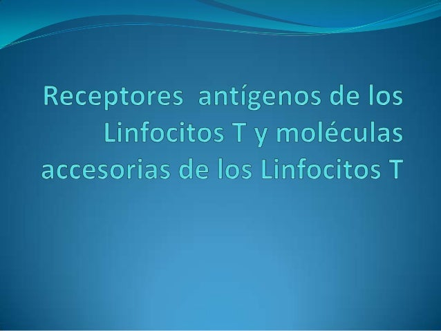  Los linfocitos T responden a fragmentos peptídicos de antígenos proteínicos que le son presentados por las células prese...