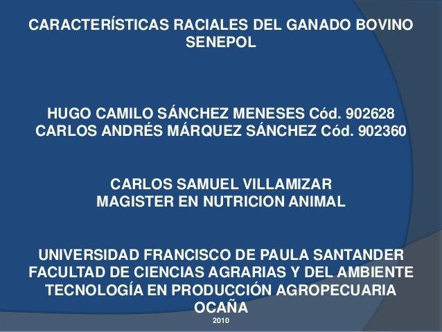 CARACTERÍSTICAS RACIALES DEL GANADO BOVINO                 SENEPOL HUGO CAMILO SÁNCHEZ MENESES Cód. 902628CARLOS ANDRÉS MÁ...