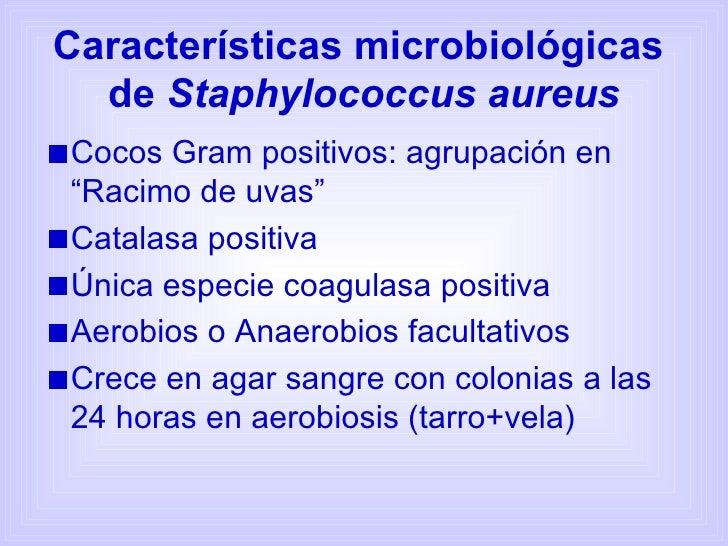 """Características microbiológicas  de  Staphylococcus aureus <ul><li>Cocos Gram positivos: agrupación en """"Racimo de uvas"""" </..."""