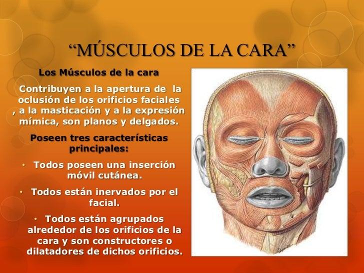 """""""MÚSCULOS DE LA CARA""""<br />Los Músculos de la cara<br />Contribuyen a la apertura de  la oclusión de los orificios faciale..."""
