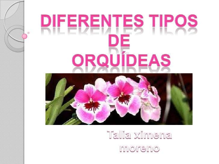 Orquídeas epífitas Orquídeas semiterrestres Orquídeas terrestres