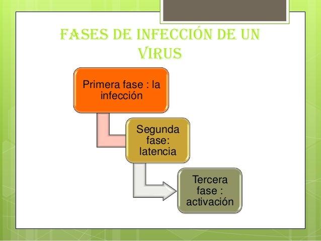 Fases de infección de unvirusPrimera fase : lainfecciónSegundafase:latenciaTercerafase :activación