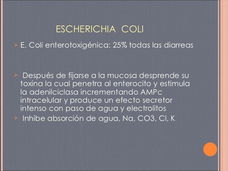 ESCHERICHIA  COLI <ul><li>E. Coli enterotoxigénica: 25% todas las diarreas </li></ul><ul><li>Después de fijarse a la mucos...