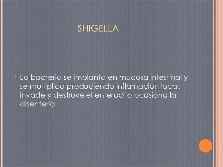 SHIGELLA <ul><li>La bacteria se implanta en mucosa intestinal y se multiplica produciendo inflamación local, invade y dest...