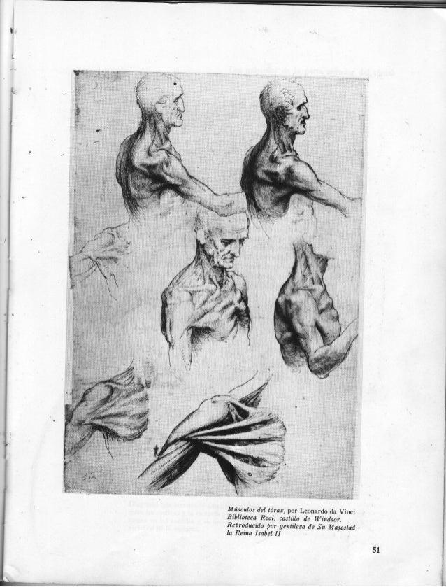 Dibujo anatómico de la figura humana hun