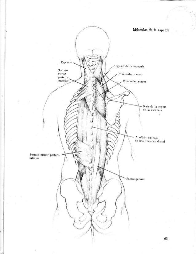 Lujo Diagrama De Huesos De La Espalda Adorno - Imágenes de Anatomía ...