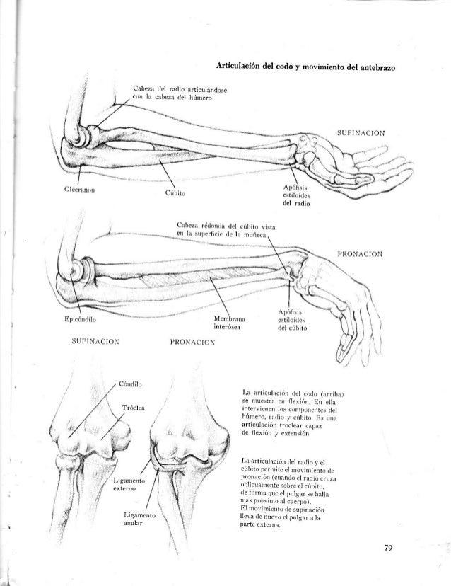Lujo Anatomía Bruto De Hígado Festooning - Imágenes de Anatomía ...