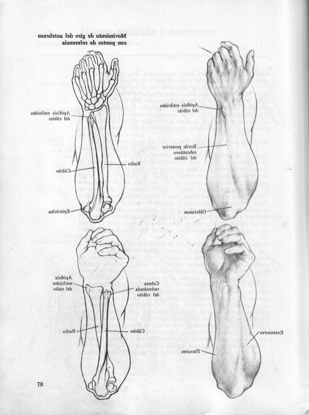 Anatoma Humana Dibujo. Amazing Escuela De Dibujo De Anatomia Humana ...
