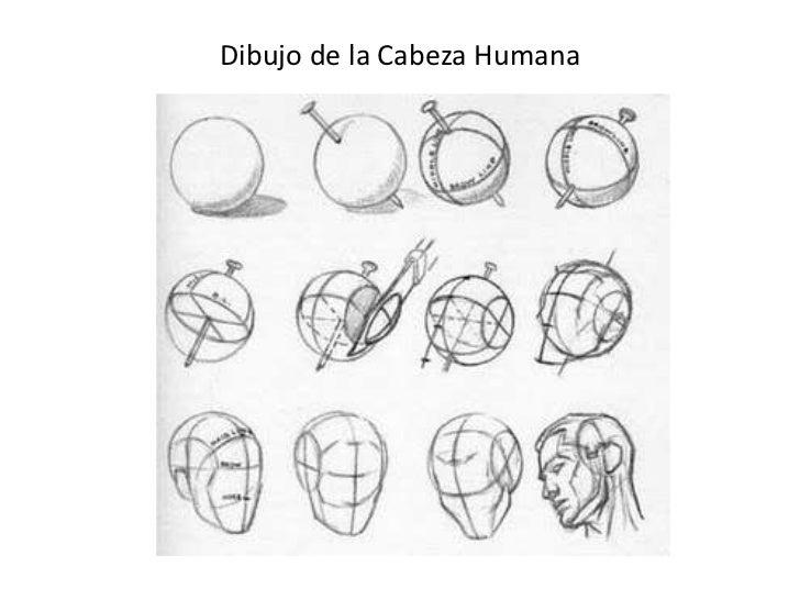 Dibujo de la Cabeza Humana<br />