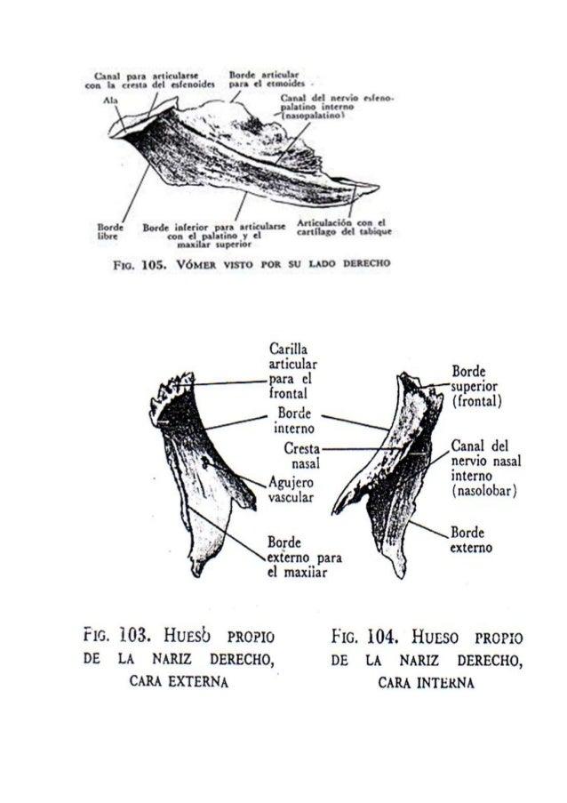 Dibujos de anatomia