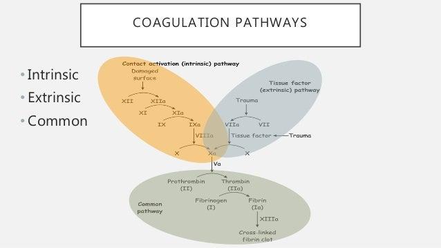 COAGULATION PATHWAYS • Intrinsic • Extrinsic • Common