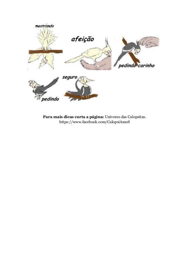 Para mais dicas curta a página: Universo das Calopsitas.  https://www.facebook.com/CalopsiAmoS