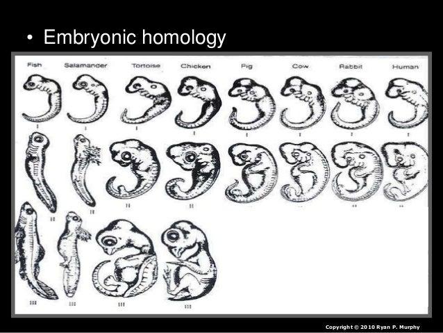 Dichotomous Key, Classification Lesson PowerPoint, Biology