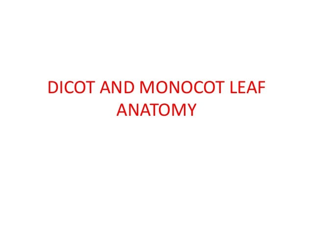 Dicot And Monocot Leaf Anatomy
