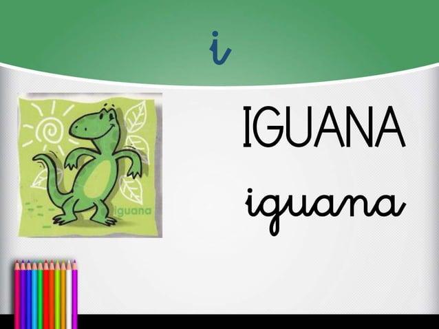 i  IGUANA  iguana