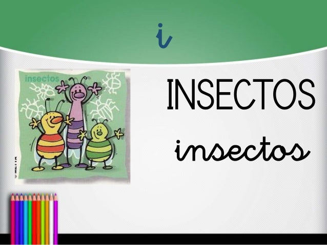 i  INSECTOS  insectos