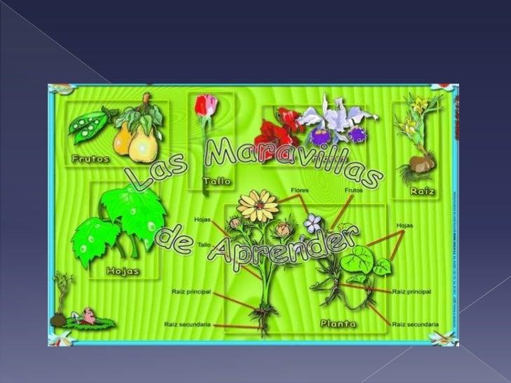 Proyecto De Las Plantas