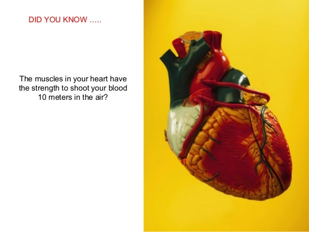 SABIAS QUE…The muscles in your heart havethe strength to shoot your blood10 meters in the air?DID YOU KNOW …..