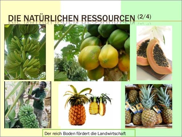 Palmöl  Die Wasserkraftwerke für die Elektrifizierung  Offshore-Vorkommen  « Hévéa »