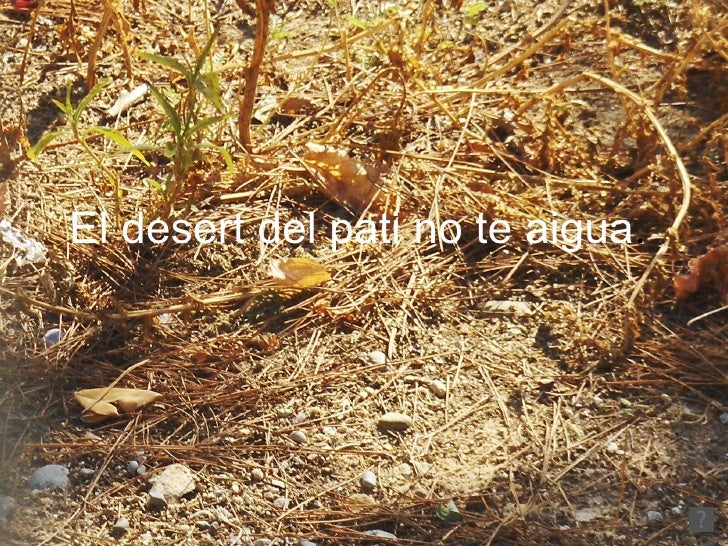 El desert del pati no te aigua .