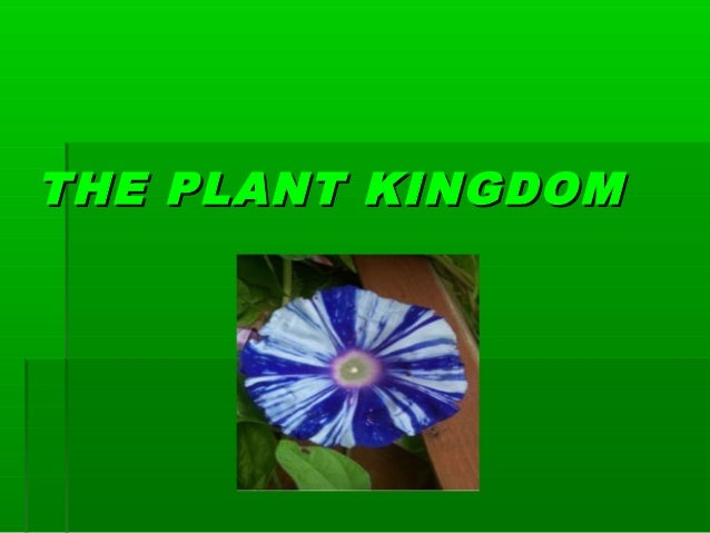 THE PLANT KINGDOMTHE PLANT KINGDOM