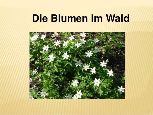 1 Die Blumen im Wald