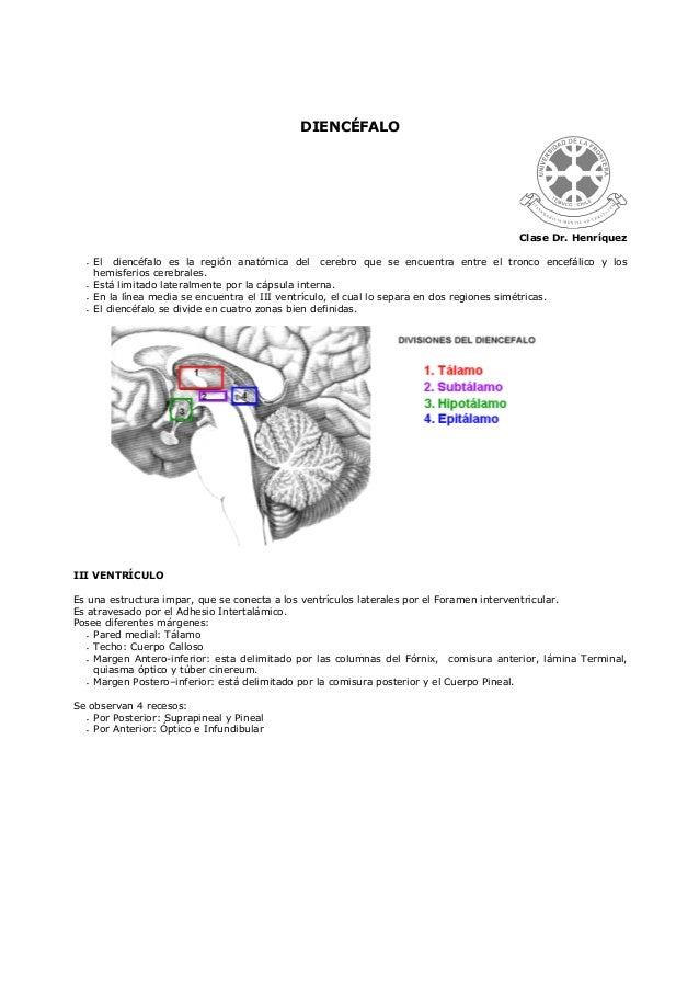 DIENCÉFALOClase Dr. HenríquezEl diencéfalo es la región anatómica del cerebro que se encuentra entre el tronco encefálico ...
