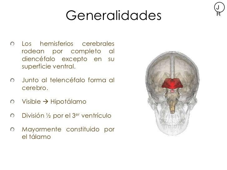 Neuroanatomía del Diencéfalo Slide 3