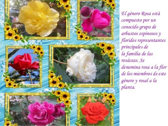 Diente de le n y plantas ornamentales del corregimiento for Todas las plantas son ornamentales