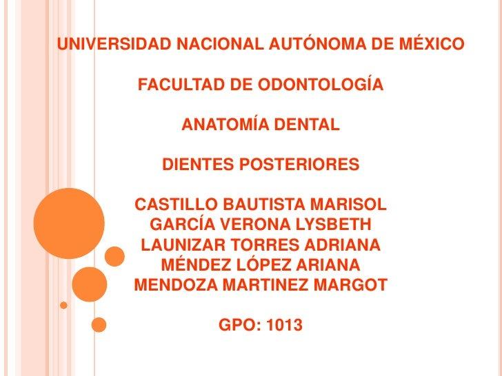 UNIVERSIDAD NACIONAL AUTÓNOMA DE MÉXICO       FACULTAD DE ODONTOLOGÍA           ANATOMÍA DENTAL          DIENTES POSTERIOR...