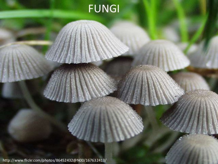 FUNGIhttp://www.flickr.com/photos/86452432@N00/167632413/